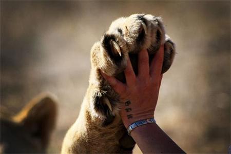 #FurFreeBritain campaign gains momentum